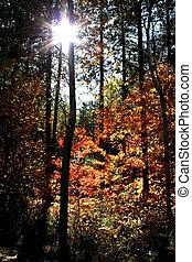 autumn trees - Autumn time - Sun light through trees