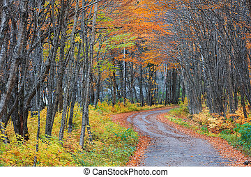 Autumn trees by scenic road through rural Quebec province