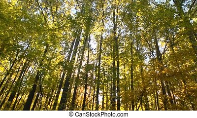 autumn trees drive by - The sun bursts through the fall...