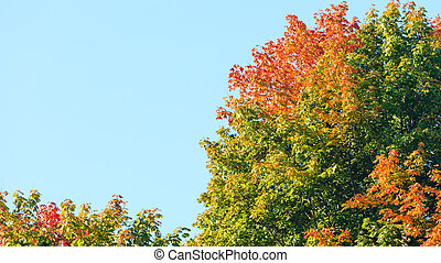 Autumn trees. Fall tree against the blue sky.