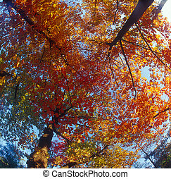 Autumn trees. - Fall trees against the blue sky. High...