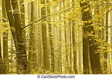 Autumn trees in a fog.
