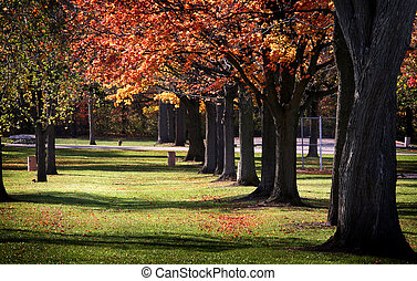 Autumn Trees In A Row
