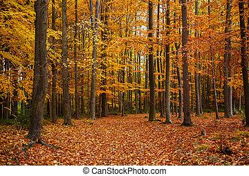 Autumn trees in park