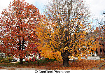 autumn trees in residential area
