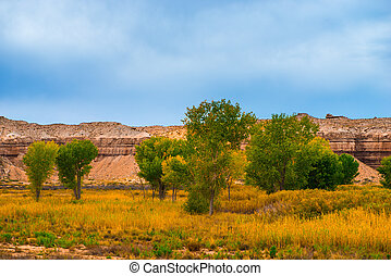 Autumn Trees in the Canyon Utah Fall Landscape
