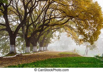 Autumn trees in the fog