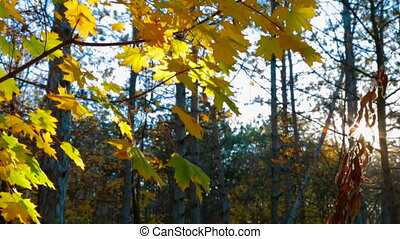 Autumn Trees In Yellow Leaves