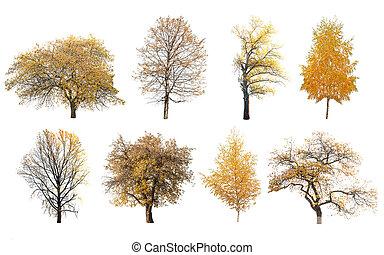 autumn trees isolated