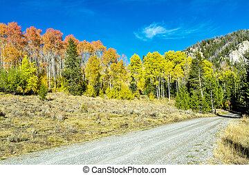 Autumn trees line a dirt road