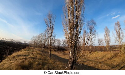 autumn trees growing near plowed agricultural field, view from drone