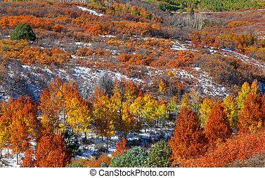 Autumn trees on Mount Sniffles