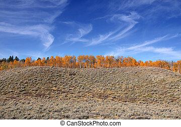 Autumn trees on the hill