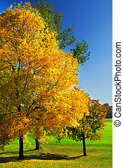 Autumn trees - Group of colorful trees in autumn park