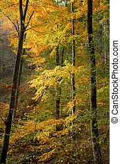 Sunlit autumn woods with colored leaves.