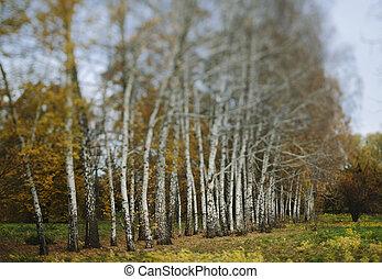 autumn  trees - Tilt-shift lens used .