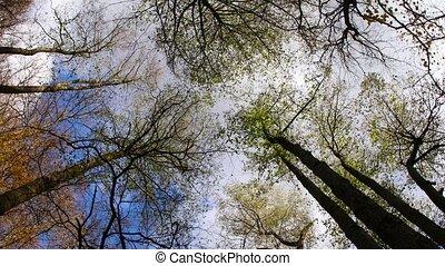Autumn trees top