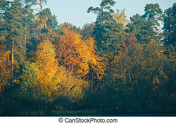 Autumn trees with colorful leaves.