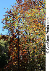 autumn trees with colorful leaves