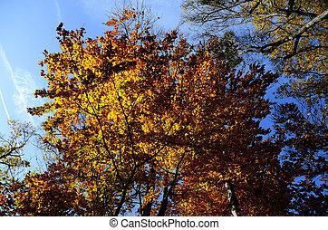 autumn trees with sky