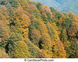 Autumn trees with yellow green and crimson foliage in the mountains