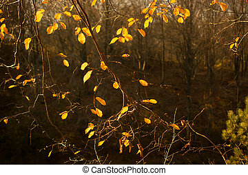 Autumn trees with yellow leaves in Autumn