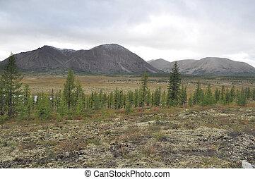 Autumn tundra on the background of mountains in Yakutia. ...