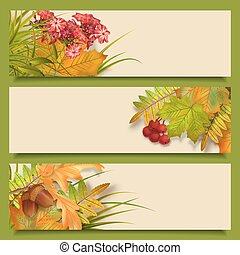 Vector autumn banners with rowan berry and maple fall leaves, flowers, grass