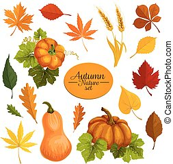 Autumn vector icons of leaf fall and harvest