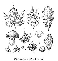 Autumn vector set with leaves, berries, chestnuts, nuts, mushrooms and acorns. Detailed forest botanical elements