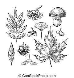 Autumn vector set with leaves, berries, chestnuts, nuts, mushrooms and acorns. Detailed forest botanical