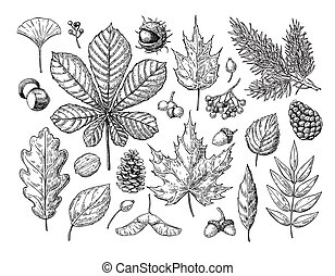 Autumn vector set with leaves, berries, fir cones, nuts, mushrooms and acorns.
