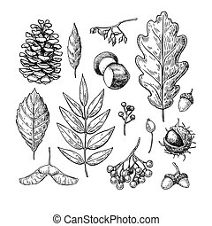 Autumn vector set with leaves, berries, fir cones, nuts, mushrooms and acorns. Detailed forest botanical elements