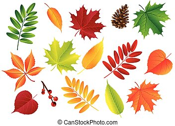 Autumn vector set with leaves, cones. Forest botanical elements for decoration. Vintage fall seasonal decor.