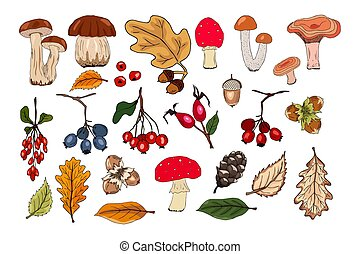 Autumn vector set with leaves, nuts, mushrooms, berries, fir cones and acorns. Forest botanical elements for decoration for invitation, cards, flyers, label, packaging