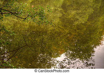 Autumn vibrant color and details reflected in smooth lake