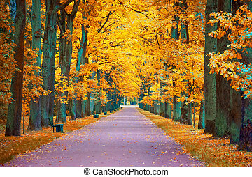 Autumn view of an oak alley with a footpath and benches.