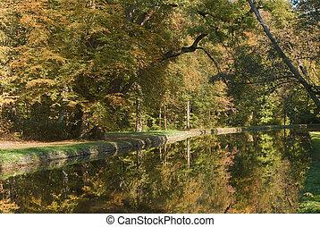 Foliage With Stream