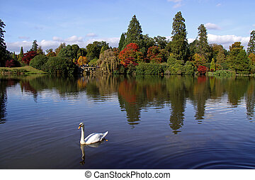 Autumn view of swan on a lake