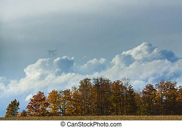 Autumn View of Trees and Foliage in natural landscape