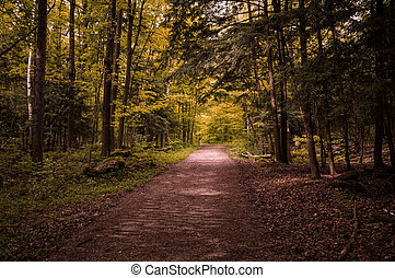 Autumn view on the forest path out from the darkness in Crawford Lake park, Ontario, Canada