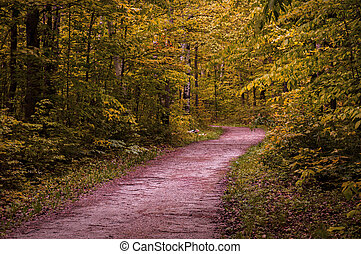 Autumn view on winding forest path in Crawford Lake park, Ontario, Canada.