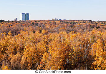 yellow forest trees and urban house in sunny day