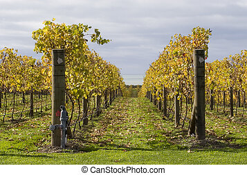 Autumn Vines 02