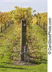 Autumn Vines 05