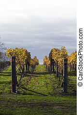 Autumn Vines 06