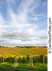 Autumn Vines - Vineyard in the Adelaide Hills, South ...