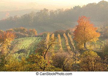 autumn vineyard countryside