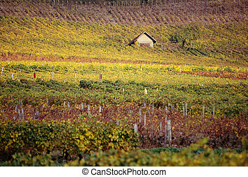 Colorfull vineyards in Savoy near Chambery, fall time.