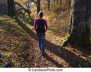 Autumn walk in the forest